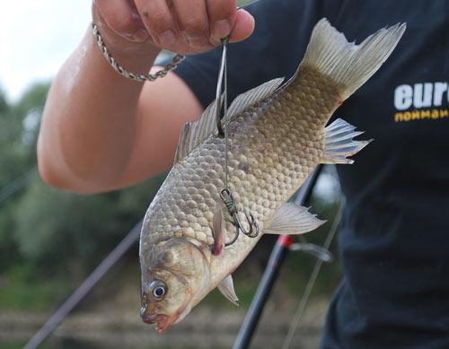 Новая фотогалерея посвященная темам: ресторан три карася в днепропетровске, рыба карась которые живут в пруду...